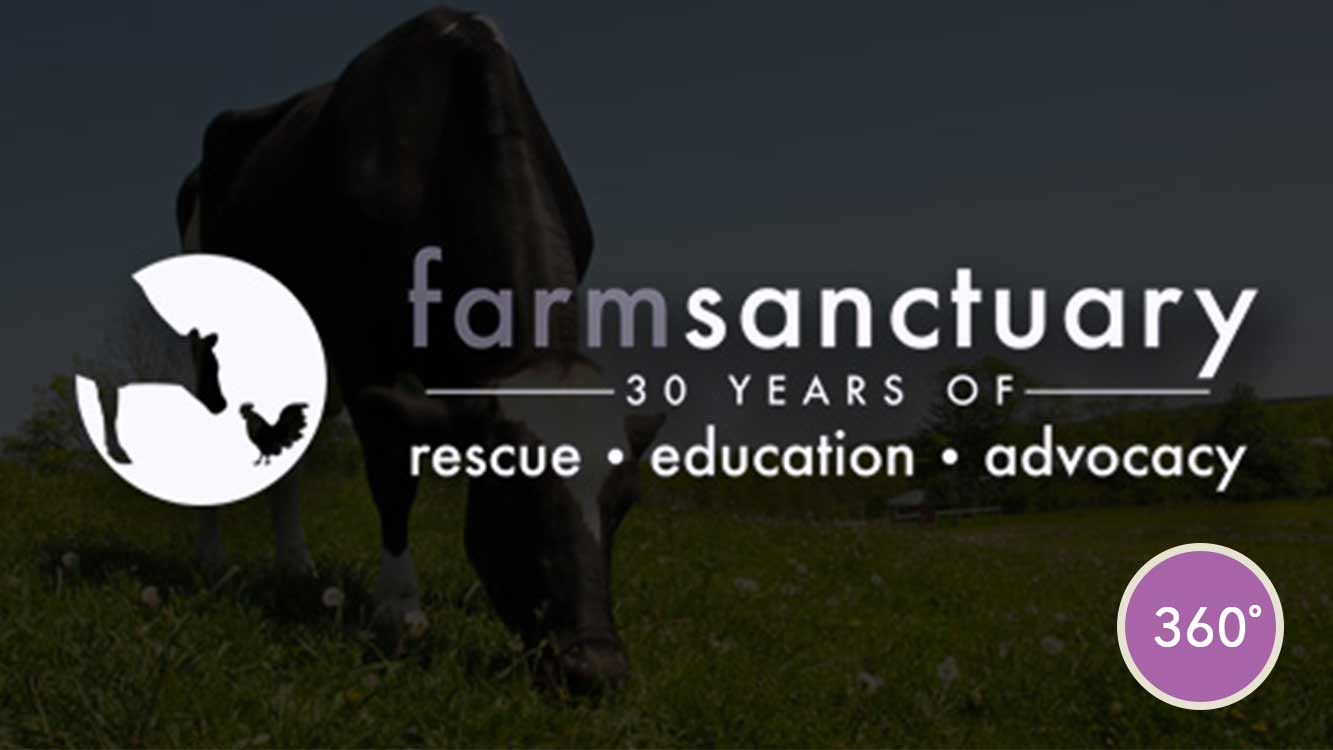 farmsanctuary_vr_image